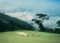 Awana Genting Highlands Golf & Country Resort - Green