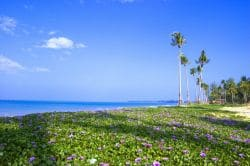 Hua Hin - Pattaya (2-Destination) Golf Package