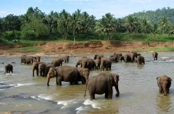 Sri Lanka Golf Explorer Holiday