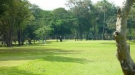 Apo Golf & Country Club - Green